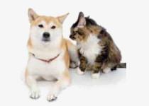 犬猫の狂犬病抗体検査のイメージ